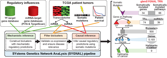 SYstems Genetics Network AnaLysis (SYGNAL)